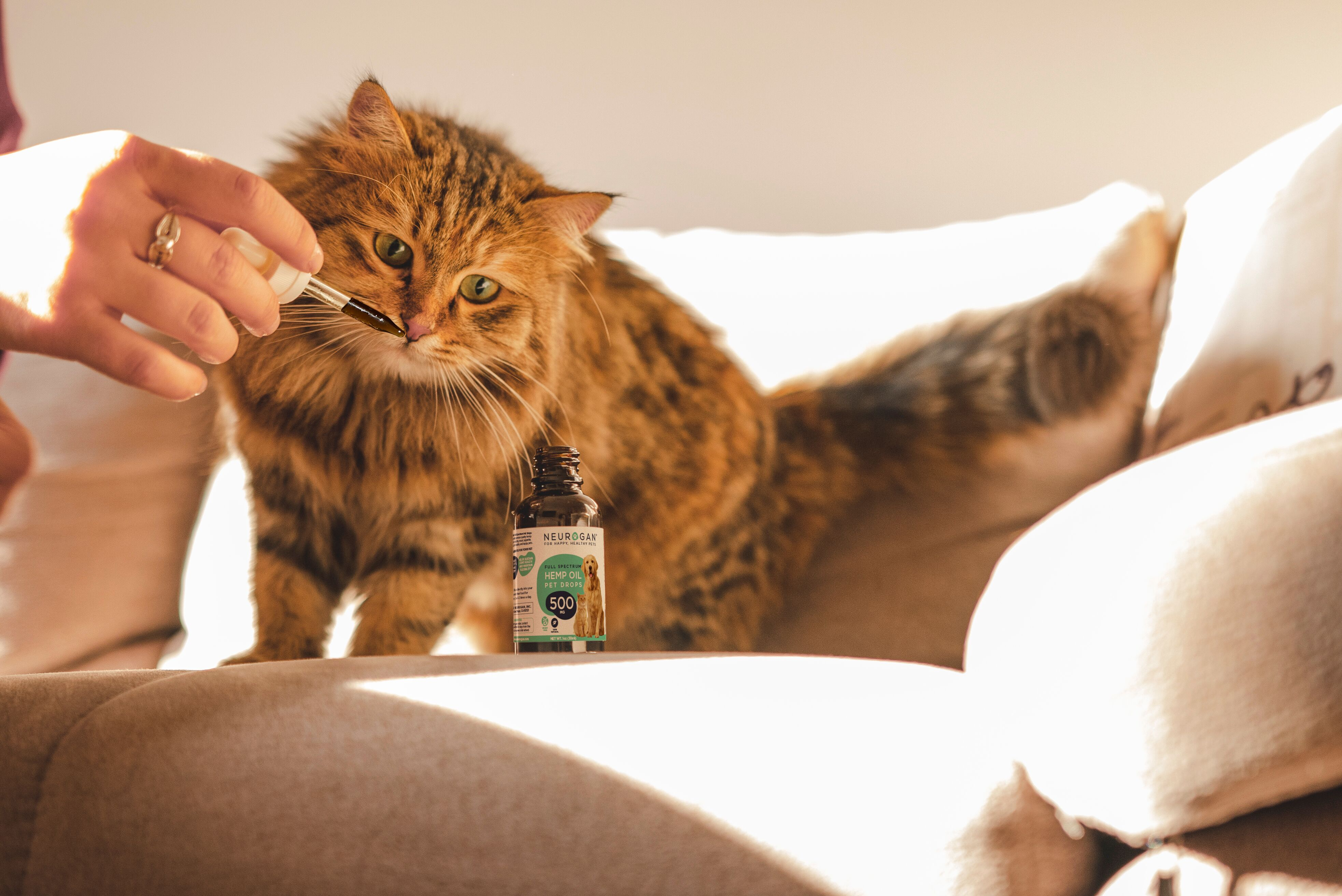 neurogan cbd for cats