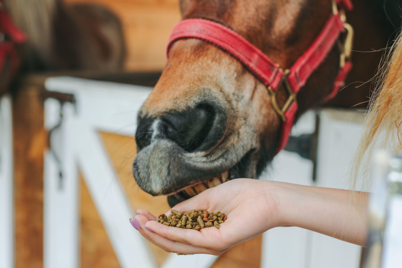 neurogan horse pellets pic