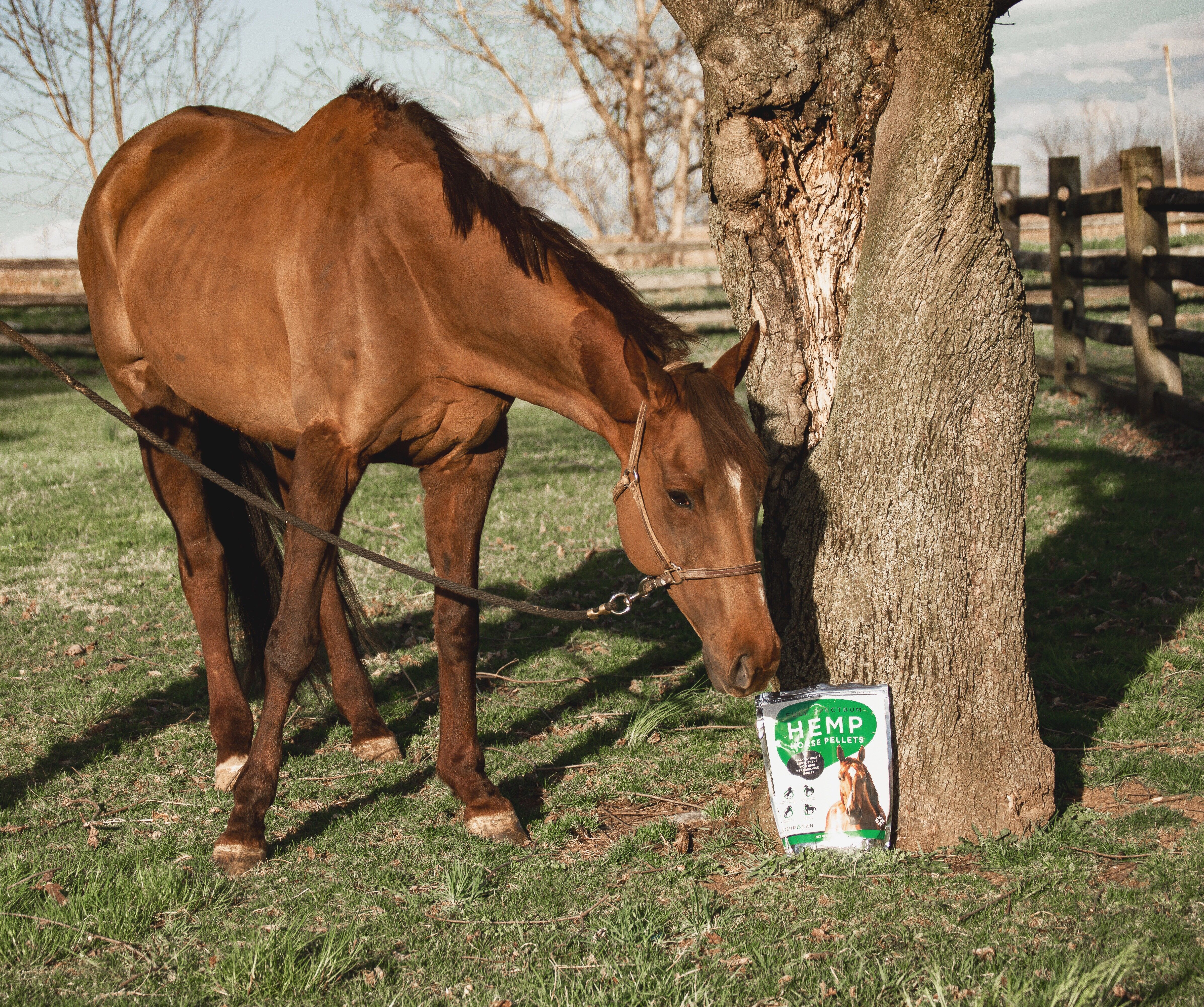 neurogan horse pellets